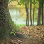 Śliczny oraz {zadbany ogród to nie lada wyzwanie, szczególnie jak jego pielęgnacją zajmujemy się sami.